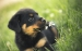 Puppy-dogs-35247732-1440-900